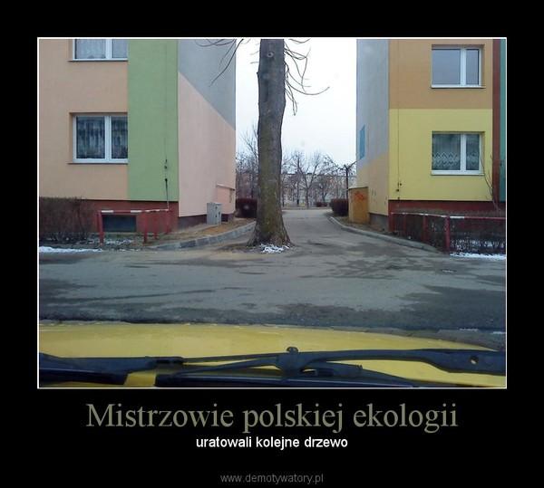 Mistrzowie polskiej ekologii – uratowali kolejne drzewo