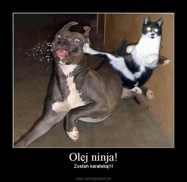 Olej ninja! – Zostań karateką!!!