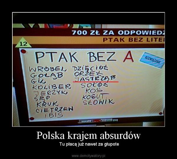 Polska krajem absurdów –  Tu płacą już nawet za głupote
