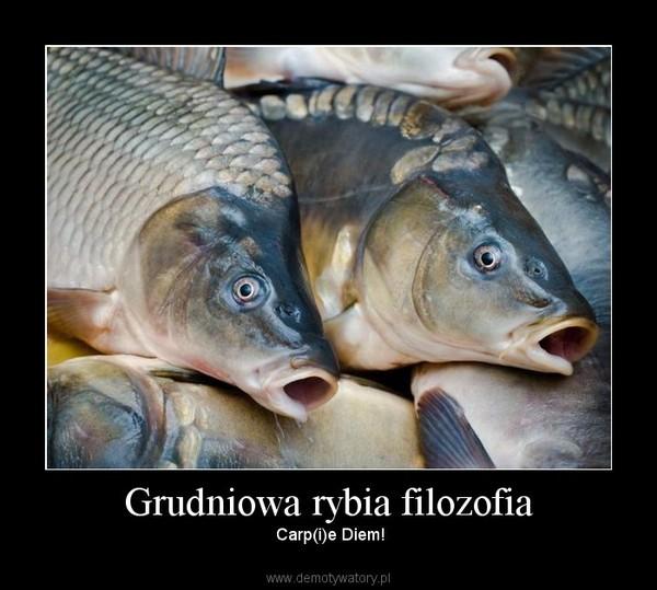 Grudniowa rybia filozofia –  Carp(i)e Diem!