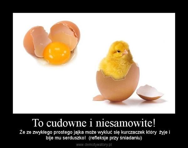 To cudowne i niesamowite! – Że ze zwykłego prostego jajka może wykluć się kurczaczek który  żyje ibije mu serduszko!  (refleksje przy śniadaniu)