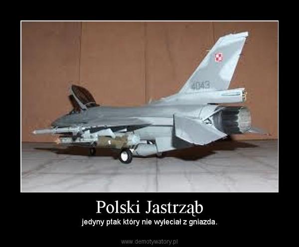 Polski Jastrząb – jedyny ptak który nie wyleciał z gniazda.