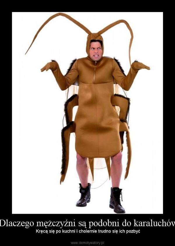 - Dlaczego mężczyźni są podobni do karaluchów? – Kręcą się po kuchni i cholernie trudno się ich pozbyć