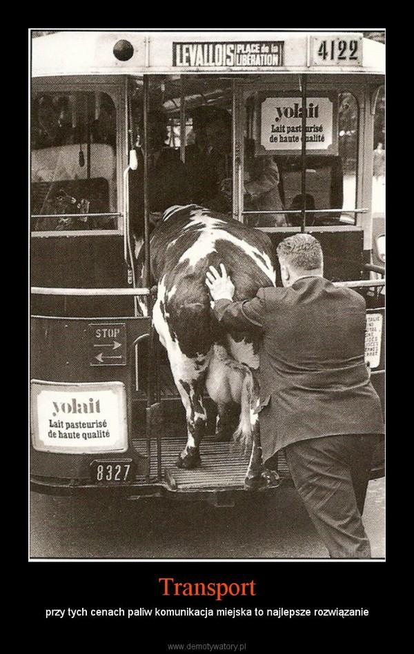Transport – przy tych cenach paliw komunikacja miejska to najlepsze rozwiązanie