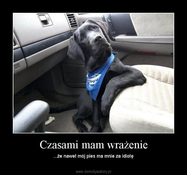 Czasami mam wrażenie – ...że nawet mój pies ma mnie za idiotę