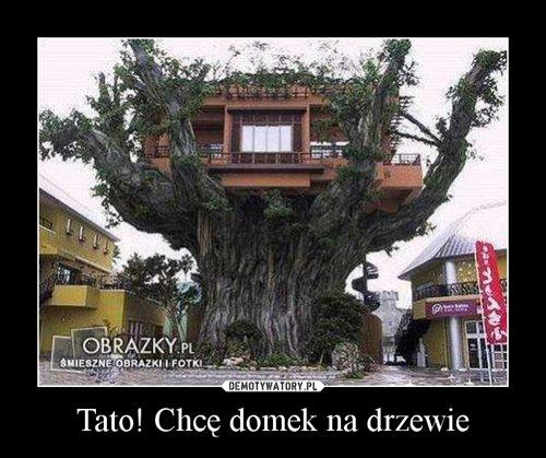 Tato! Chcę domek na drzewie