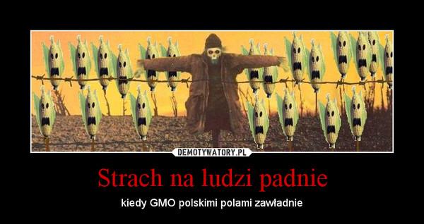 Strach na ludzi padnie – kiedy GMO polskimi polami zawładnie