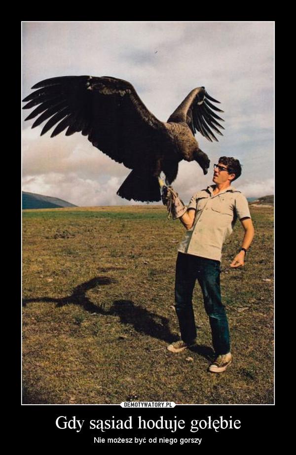 Gdy sąsiad hoduje gołębie – Nie możesz być od niego gorszy