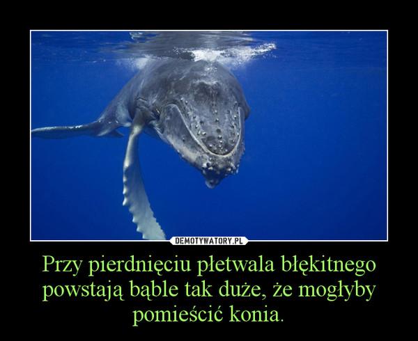 Przy pierdnięciu płetwala błękitnego powstają bąble tak duże, że mogłyby pomieścić konia. –