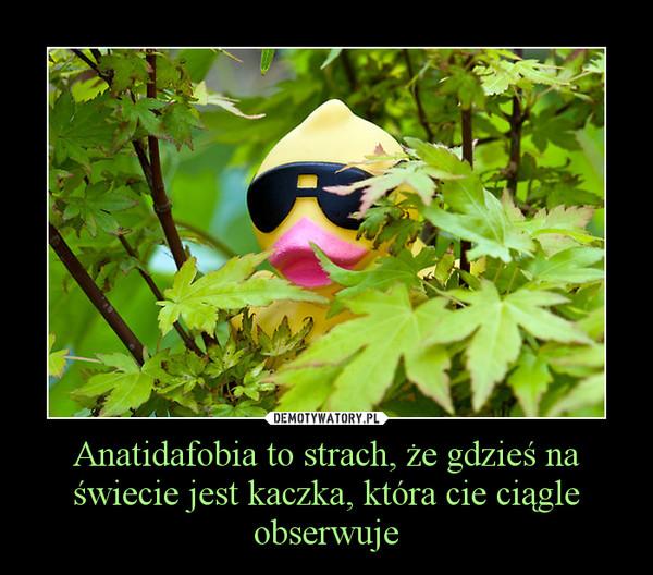 Anatidafobia to strach, że gdzieś na świecie jest kaczka, która cie ciągle obserwuje –