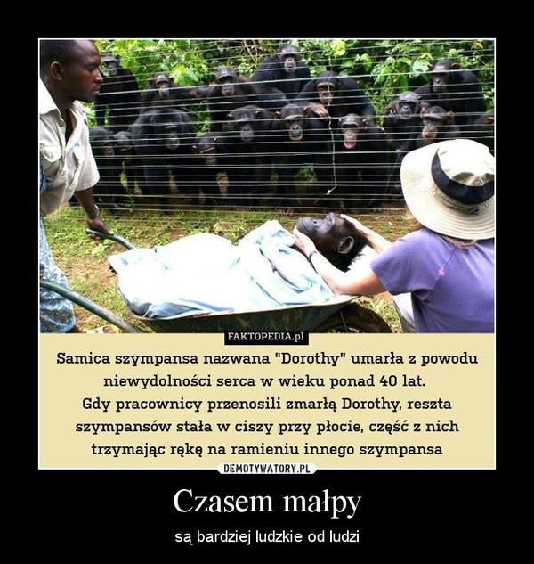 Czasem małpy – są bardziej ludzkie od ludzi