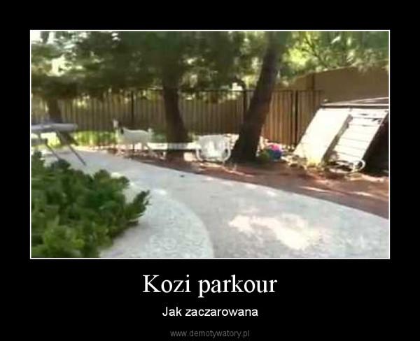 Kozi parkour – Jak zaczarowana