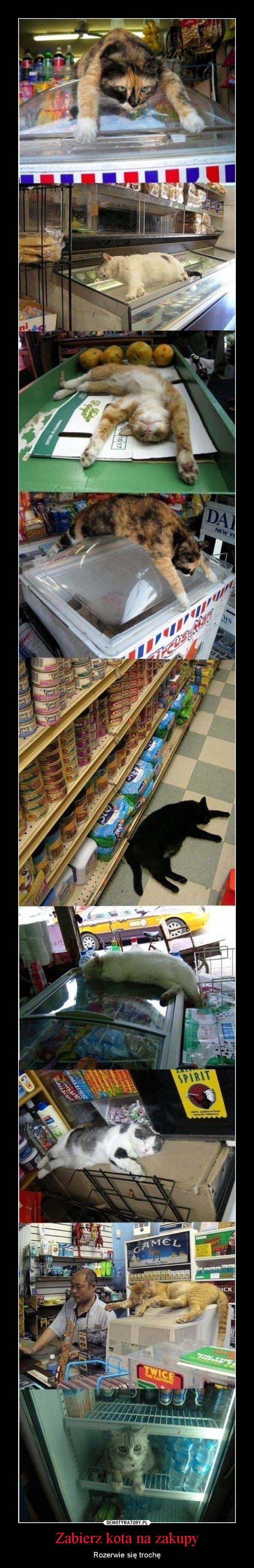 Zabierz kota na zakupy – Rozerwie się trochę