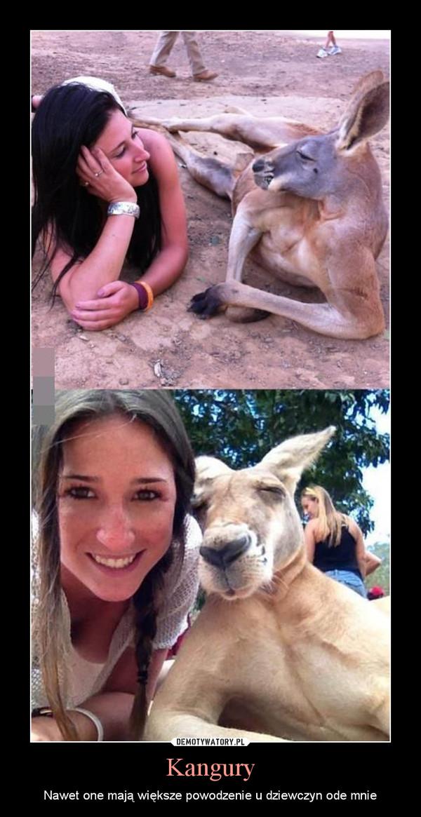 Kangury – Nawet one mają większe powodzenie u dziewczyn ode mnie
