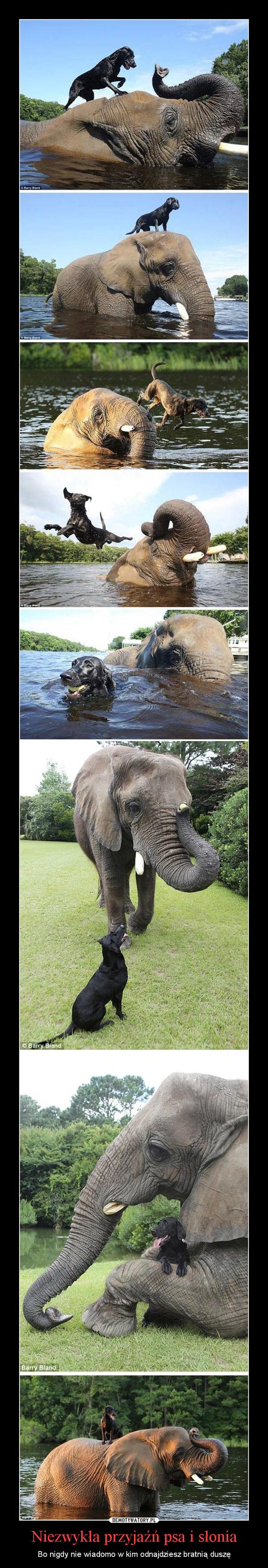 Niezwykła przyjaźń psa i słonia – Bo nigdy nie wiadomo w kim odnajdziesz bratnią duszę