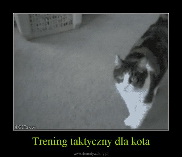 Trening taktyczny dla kota –