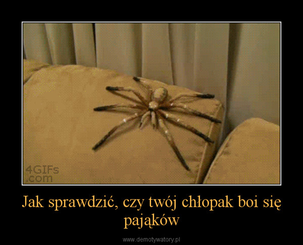 Jak sprawdzić, czy twój chłopak boi się pająków –