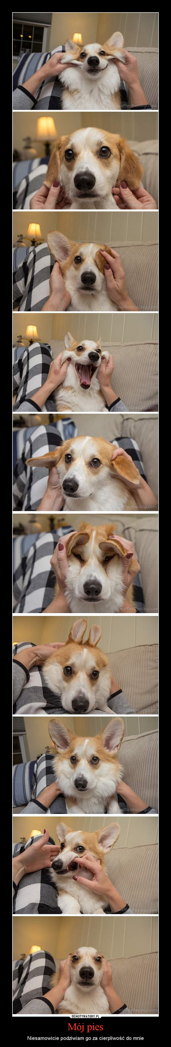 Mój pies – Niesamowicie podziwiam go za cierpliwość do mnie