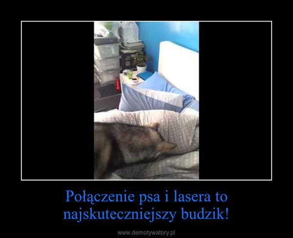 Połączenie psa i lasera to najskuteczniejszy budzik! –