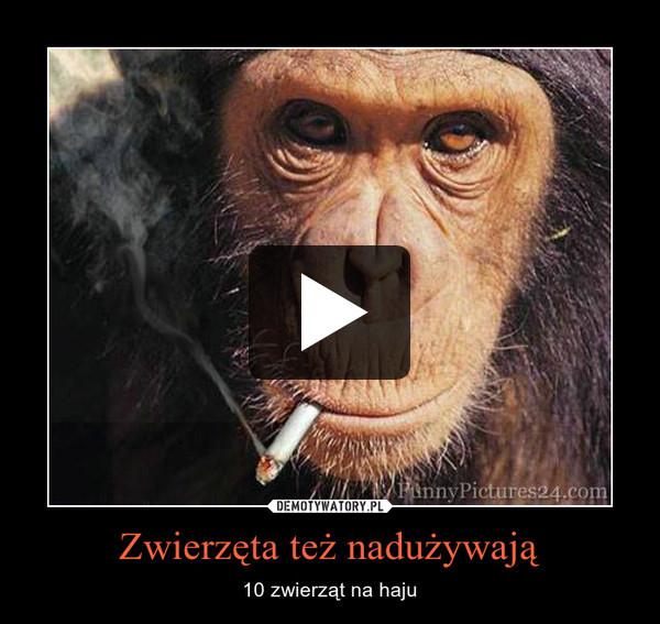 Zwierzęta też nadużywają – 10 zwierząt na haju