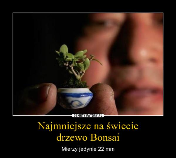 Najmniejsze na świeciedrzewo Bonsai – Mierzy jedynie 22 mm