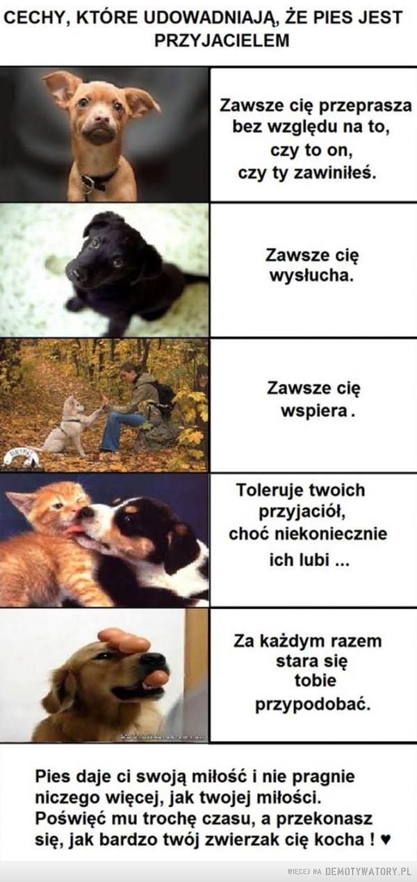 Pies to najlepszy przyjaciel: –