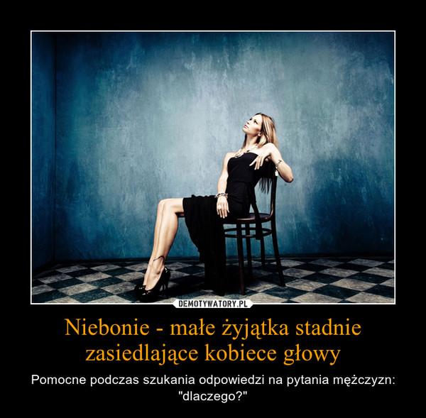 """Niebonie - małe żyjątka stadnie zasiedlające kobiece głowy – Pomocne podczas szukania odpowiedzi na pytania mężczyzn: """"dlaczego?"""""""