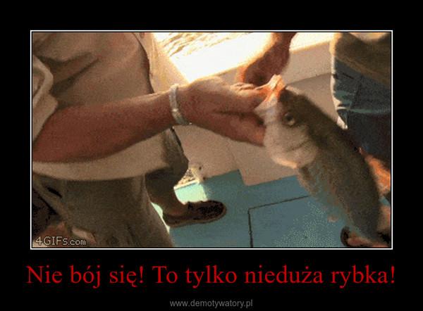 Nie bój się! To tylko nieduża rybka! –
