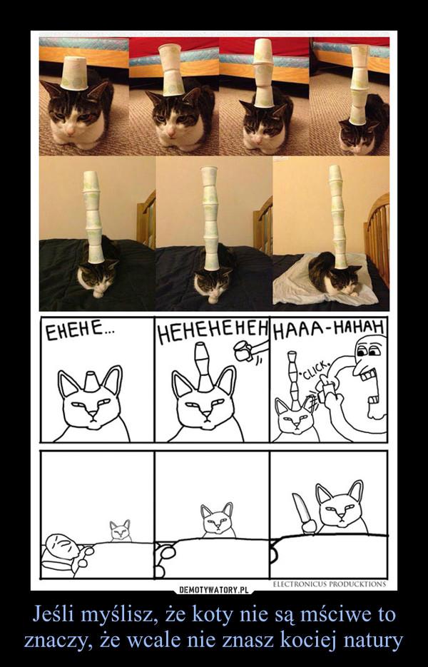 Jeśli myślisz, że koty nie są mściwe to znaczy, że wcale nie znasz kociej natury –