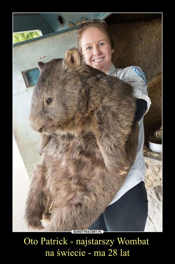 Oto Patrick - najstarszy Wombat  na świecie - ma 28 lat –