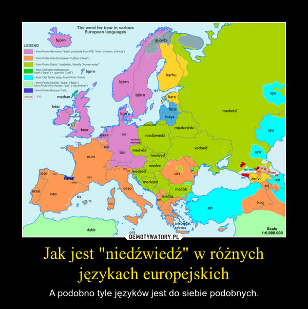 """Jak jest """"niedźwiedź"""" w różnych językach europejskich – A podobno tyle języków jest do siebie podobnych."""