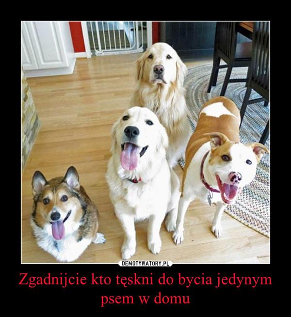 Zgadnijcie kto tęskni do bycia jedynym psem w domu –