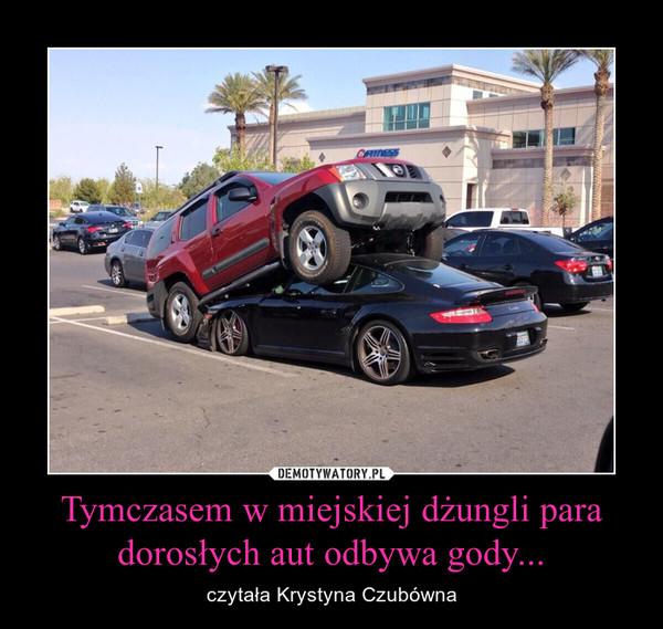 Tymczasem w miejskiej dżungli para dorosłych aut odbywa gody... – czytała Krystyna Czubówna