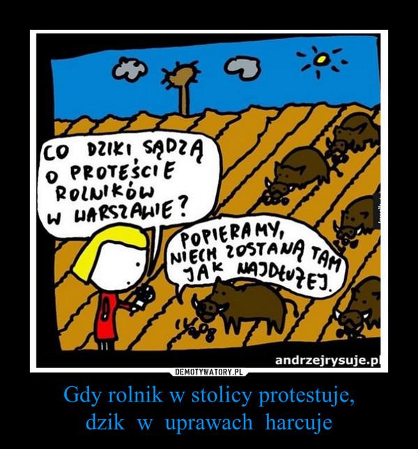 Gdy rolnik w stolicy protestuje,dzik  w  uprawach  harcuje –