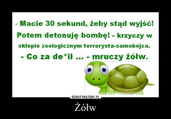 Żółw –