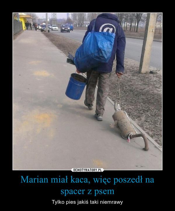 Marian miał kaca, więc poszedł na spacer z psem – Tylko pies jakiś taki niemrawy