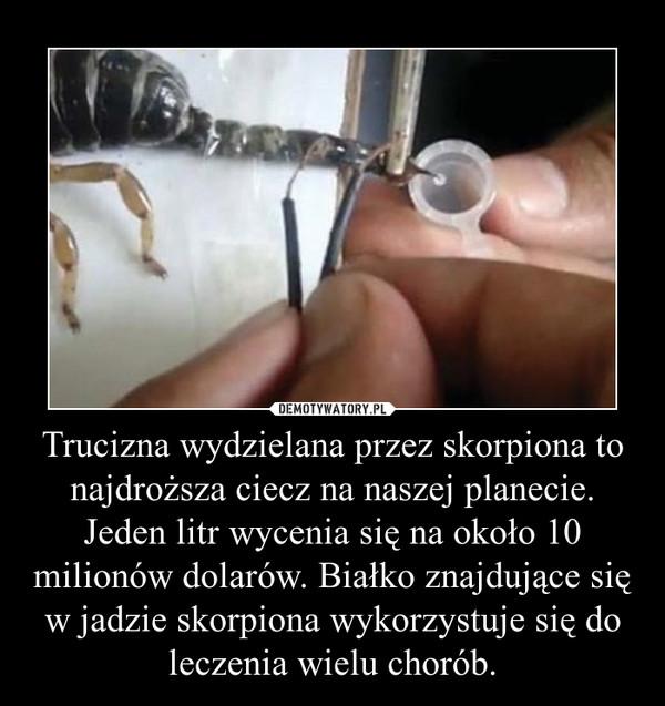 Trucizna wydzielana przez skorpiona to najdroższa ciecz na naszej planecie. Jeden litr wycenia się na około 10 milionów dolarów. Białko znajdujące się w jadzie skorpiona wykorzystuje się do leczenia wielu chorób. –