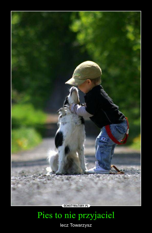 Pies to nie przyjaciel – lecz Towarzysz