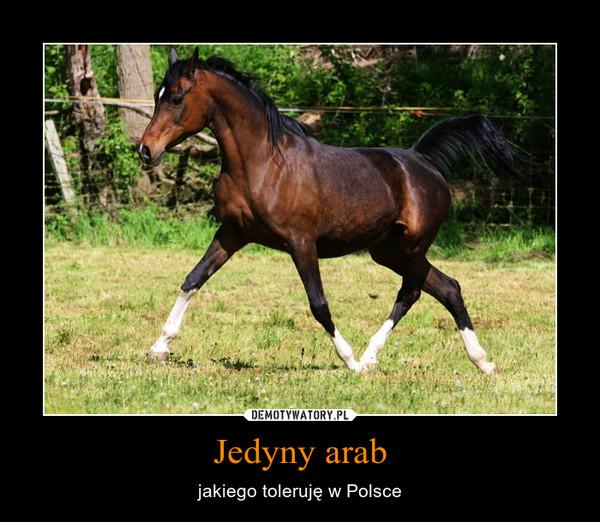 Jedyny arab – jakiego toleruję w Polsce