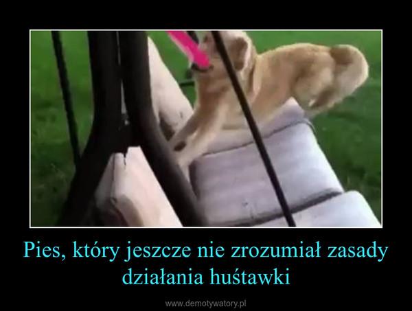 Pies, który jeszcze nie zrozumiał zasady działania huśtawki –
