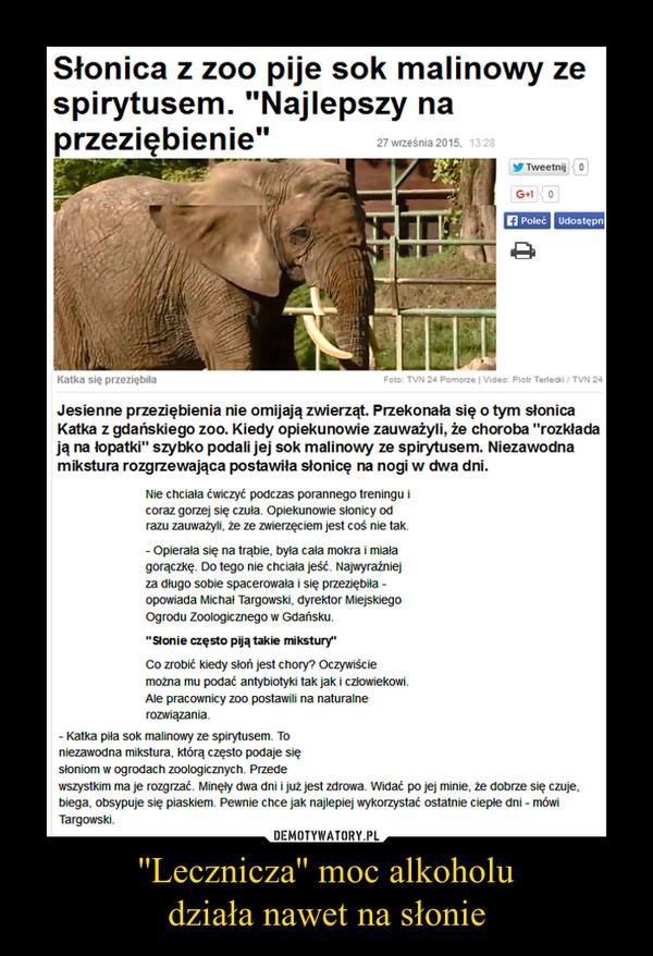 ''Lecznicza'' moc alkoholudziała nawet na słonie –
