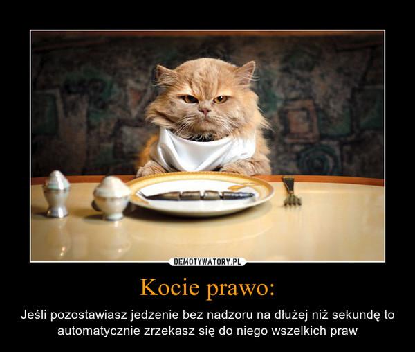 Kocie prawo: – Jeśli pozostawiasz jedzenie bez nadzoru na dłużej niż sekundę toautomatycznie zrzekasz się do niego wszelkich praw