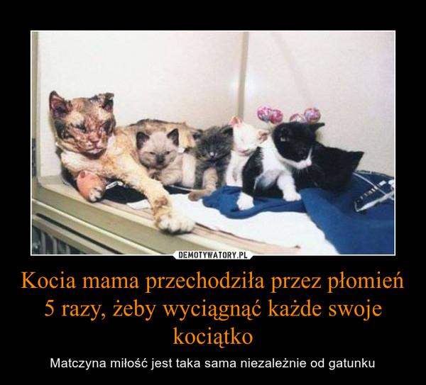 Kocia mama przechodziła przez płomień 5 razy, żeby wyciągnąć każde swoje kociątko – Matczyna miłość jest taka sama niezależnie od gatunku