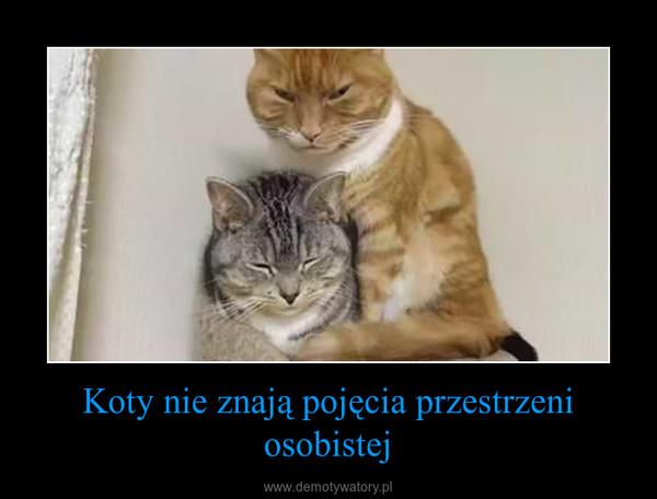 Koty nie znają pojęcia przestrzeni osobistej –