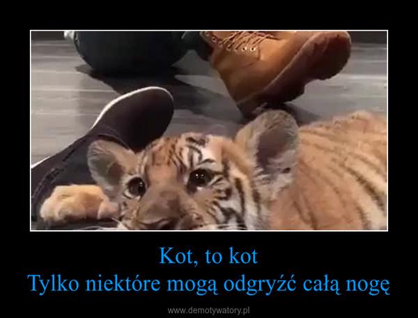 Kot, to kotTylko niektóre mogą odgryźć całą nogę –
