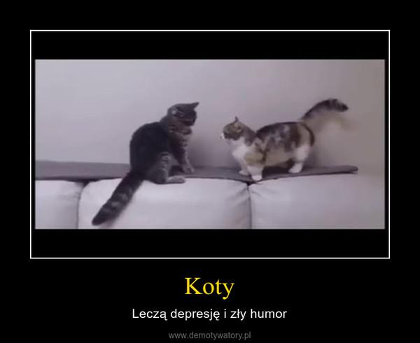 Koty – Leczą depresję i zły humor