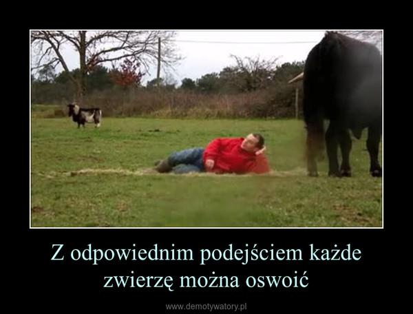 Z odpowiednim podejściem każde zwierzę można oswoić –