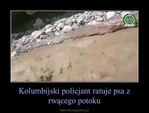 Kolumbijski policjant ratuje psa z rwącego potoku –