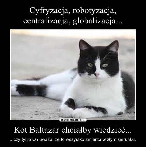 Kot Baltazar chciałby wiedzieć... – ...czy tylko On uważa, że to wszystko zmierza w złym kierunku.
