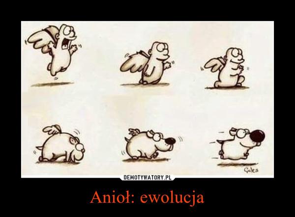 Anioł: ewolucja –